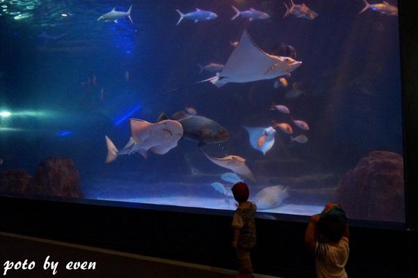 海洋公園112-20150614