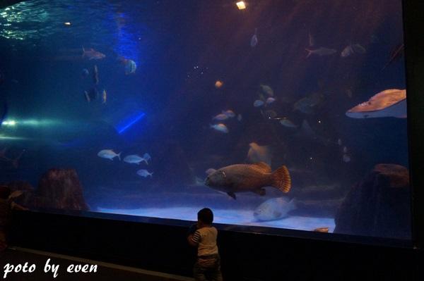 海洋公園113-20150614