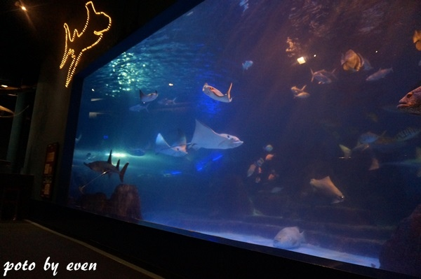 海洋公園117-20150614