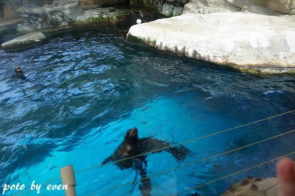 海洋公園129-20150614