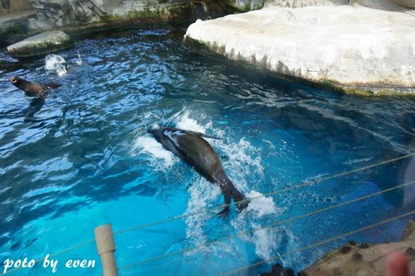 海洋公園130-20150614