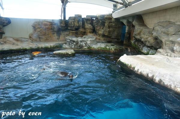 海洋公園131-20150614