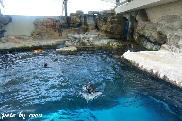 海洋公園132-20150614