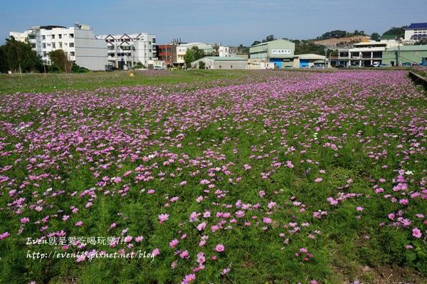 蘆竹外山花海023-20151212