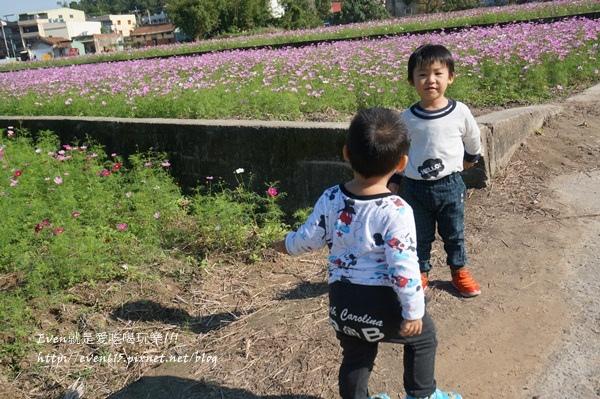 蘆竹外山花海027-20151212