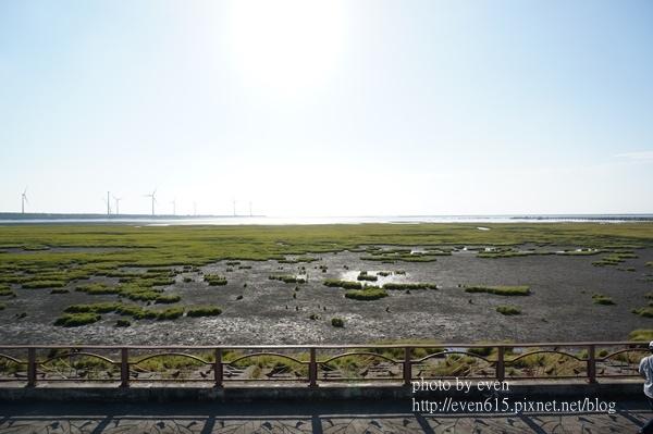 高美濕地001-20160603.JPG