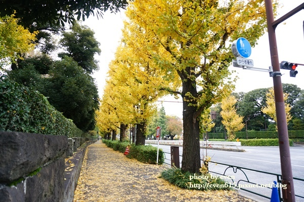 東京神宮外苑銀杏005-20161126.JPG