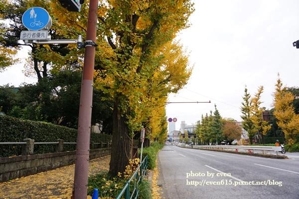 東京神宮外苑銀杏008-20161126.JPG