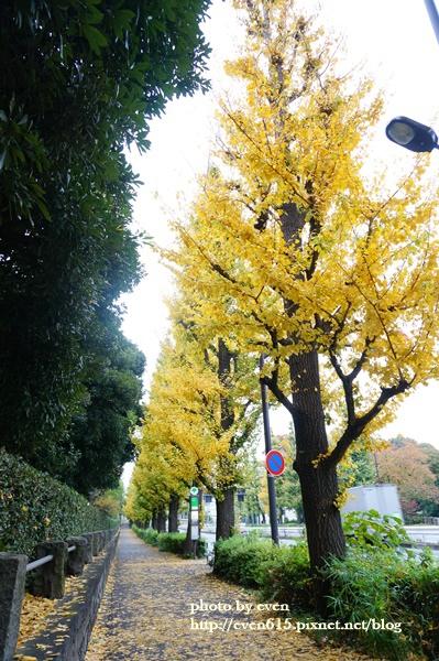 東京神宮外苑銀杏012-20161126.JPG