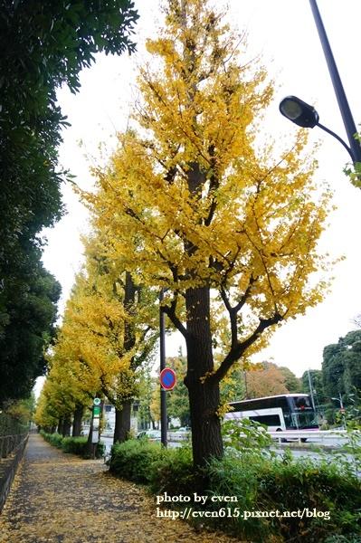 東京神宮外苑銀杏013-20161126.JPG