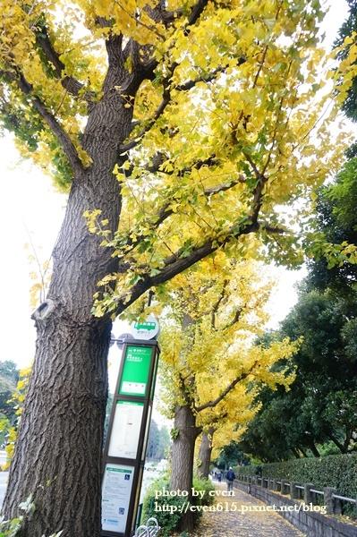 東京神宮外苑銀杏019-20161126.JPG