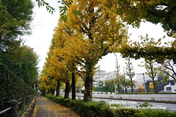 東京神宮外苑銀杏032-20161126.JPG