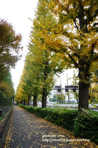 東京神宮外苑銀杏029-20161126.JPG