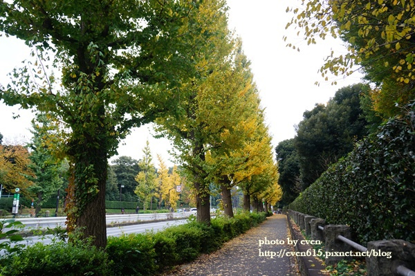 東京神宮外苑銀杏033-20161126.JPG