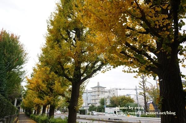 東京神宮外苑銀杏038-20161126.JPG