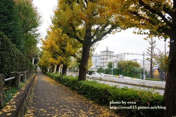 東京神宮外苑銀杏040-20161126.JPG