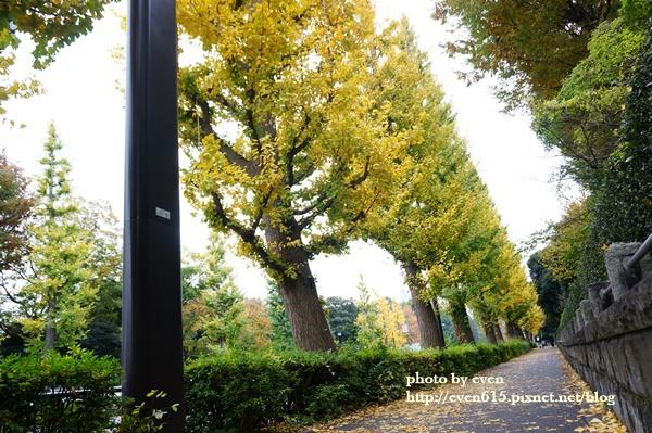 東京神宮外苑銀杏047-20161126.JPG