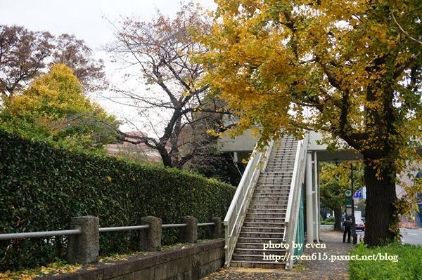 東京神宮外苑銀杏055-20161126.JPG