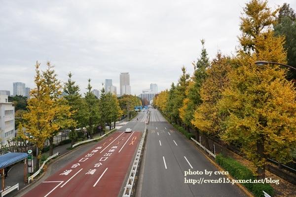 東京神宮外苑銀杏065-20161126.JPG