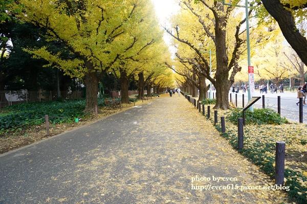東京神宮外苑銀杏076-20161126.JPG