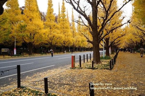 東京神宮外苑銀杏088-20161126.JPG