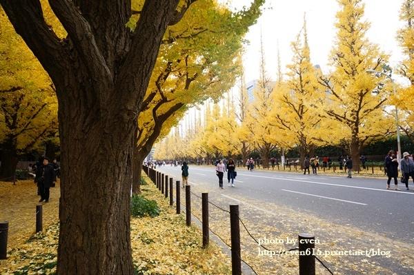 東京神宮外苑銀杏098-20161126.JPG