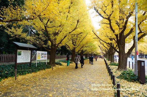 東京神宮外苑銀杏099-20161126.JPG