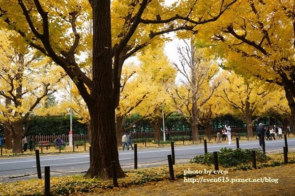 東京神宮外苑銀杏116-20161126.JPG