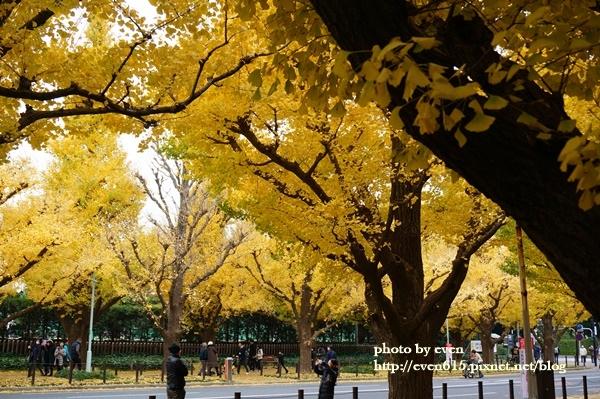 東京神宮外苑銀杏128-20161126.JPG