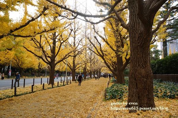東京神宮外苑銀杏147-20161126.JPG