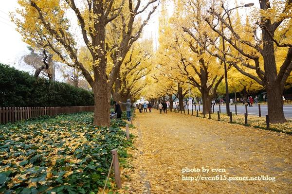 東京神宮外苑銀杏146-20161126.JPG