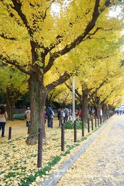 東京神宮外苑銀杏173-20161126.JPG