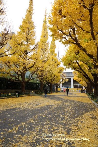 東京神宮外苑銀杏182-20161126.JPG