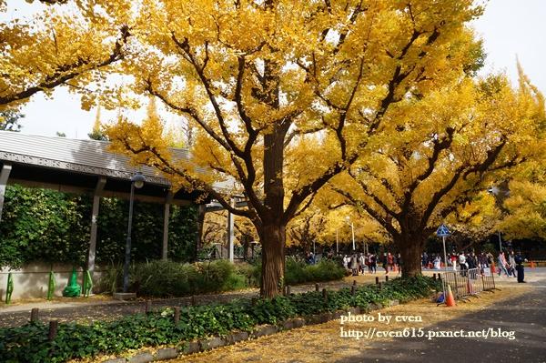 東京神宮外苑銀杏188-20161126.JPG