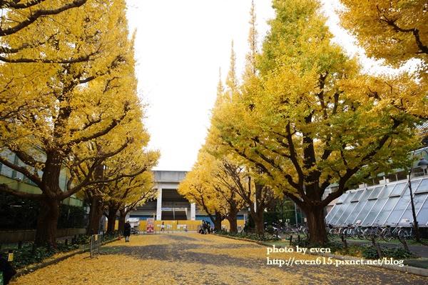 東京神宮外苑銀杏185-20161126.JPG