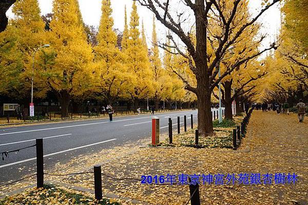 東京神宮外苑銀杏196-20161126.JPG