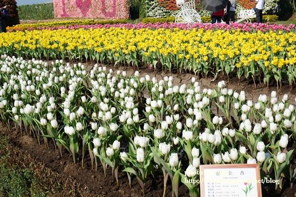 中社花園017-20161230.JPG