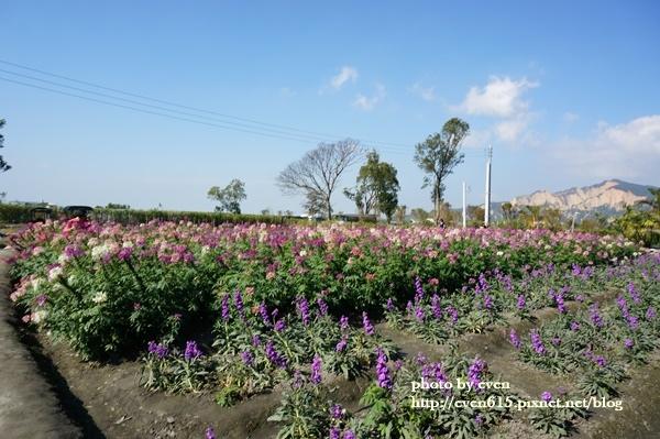 中社花園058-20161230.JPG
