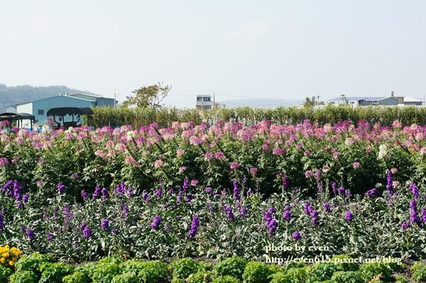中社花園057-20161230.JPG