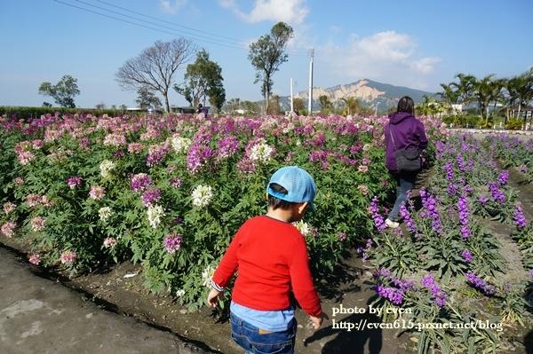 中社花園059-20161230.JPG