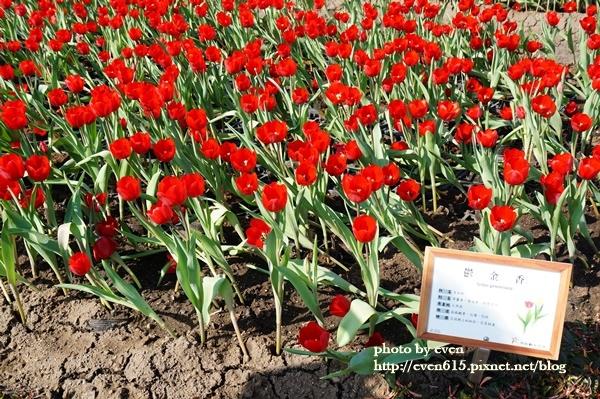 中社花園098-20161230.JPG