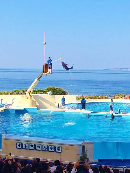 沖繩美麗海水族館—海豚表演秀贏得滿堂彩.JPG