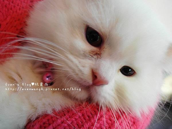 SAM_5748_副本