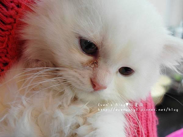 SAM_5749_副本