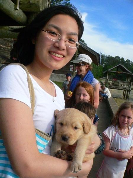 Baby黃金獵犬