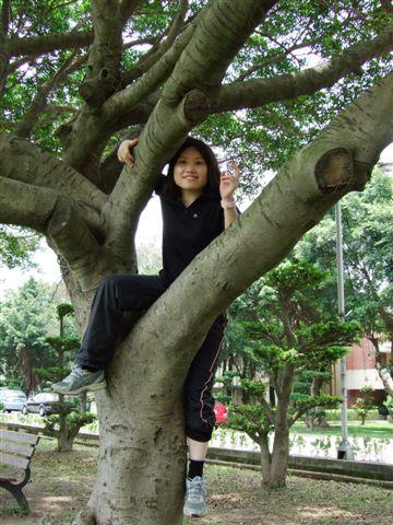 不可或缺的──爬樹