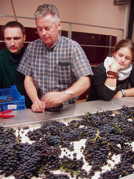 Denis Mortet n grape in processing-1.jpg