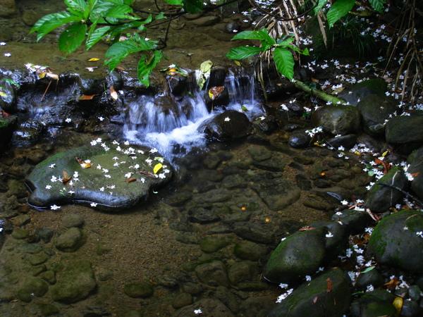 油桐花公園 262.jpg