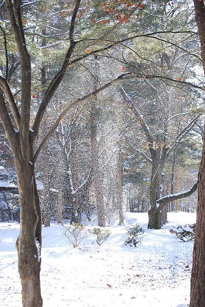 不是下雪 只是雪被吹動了~