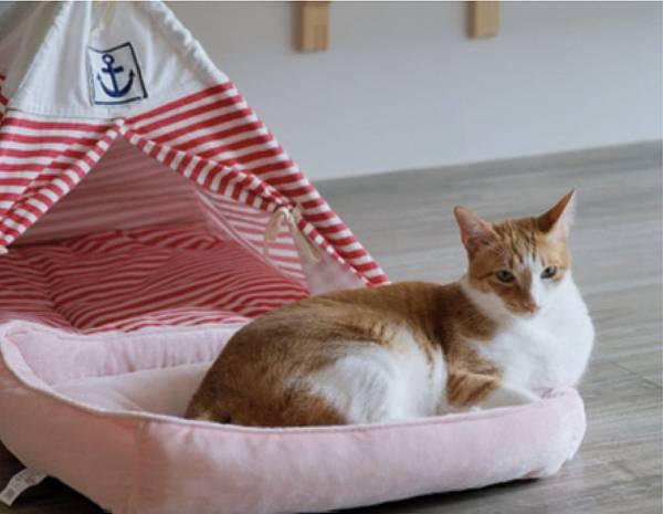 家有四隻貓!利用空間規畫打造你和貓咪都愛的家!